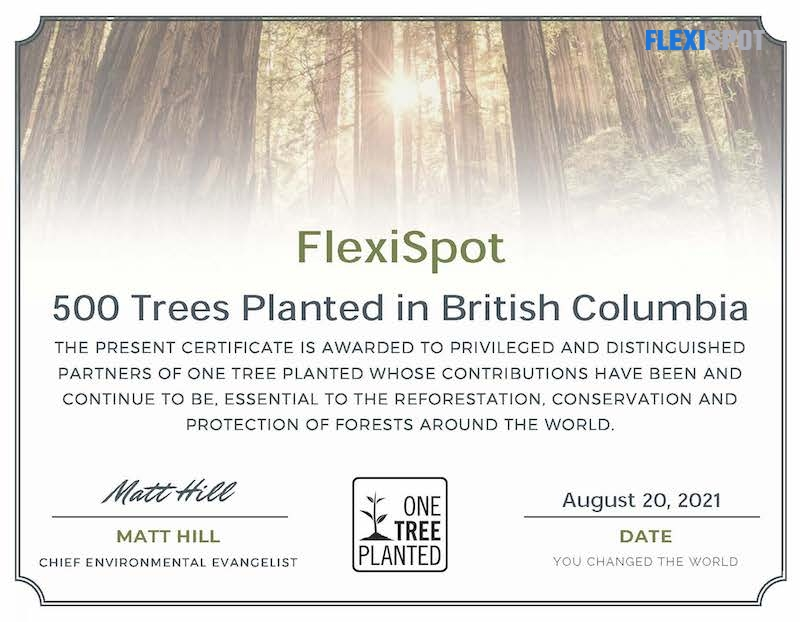 FlexiSpot Donates to Plant Trees and Becomes Part of the Global Tree Plantation Drive