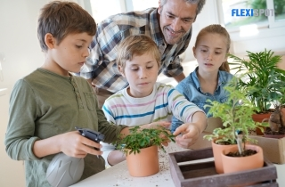 9 Reasons Why Plants are Helpful in Learning and Studying